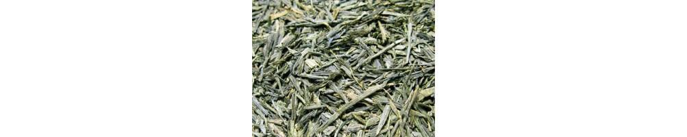 Comprar Té Verde Puro sin ningún tipo de aroma