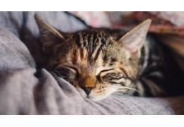 Infusiones que te ayudarán a dormir bien